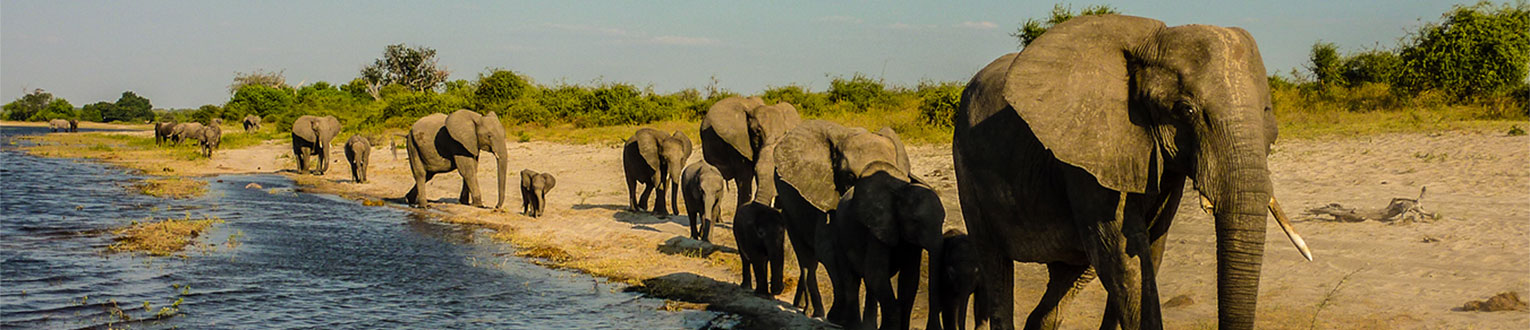 enticing africa tours for individuals