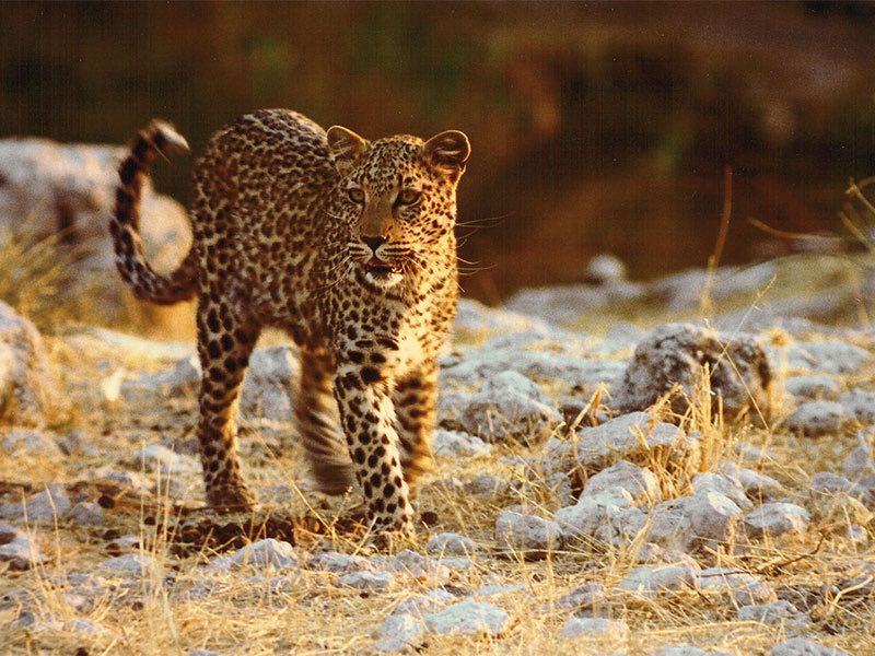 Safaris in National Parks and Game Reserves